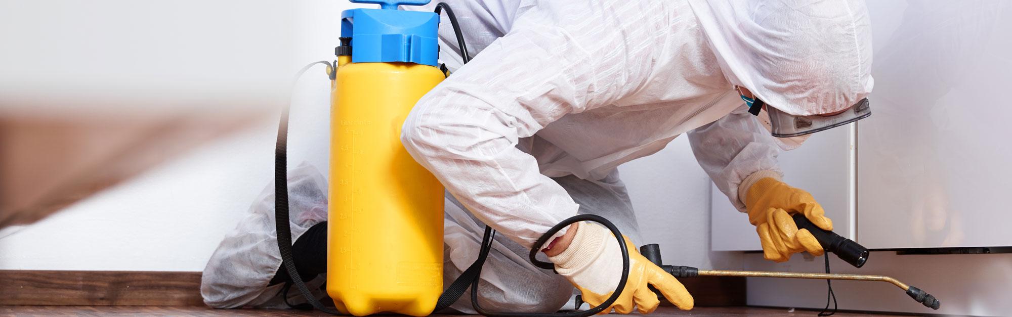 La rinascita impresa di pulizia e servizi di disinfestazione - Insetti da letto ...